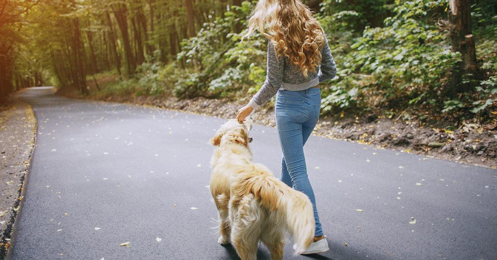 assurance responsabilité chien